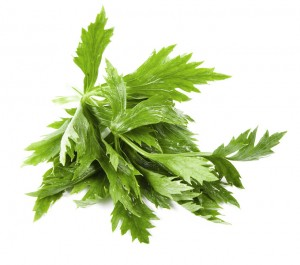 celery-leaves